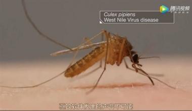 手机App真的可以驱蚊吗?赶紧卸载它吧!